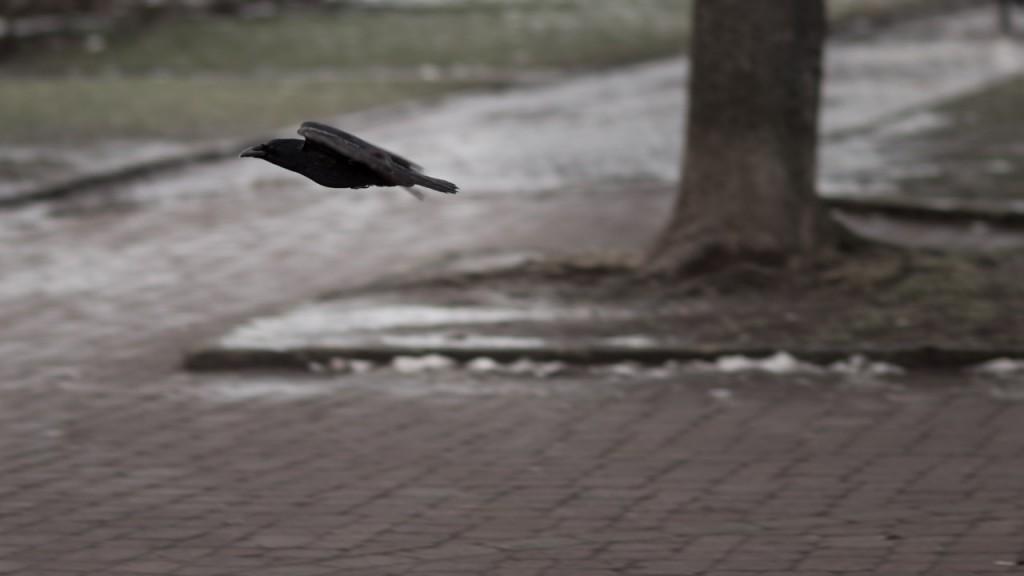 Vogel. Aufgenommen bei 100 mm, f/2.0, 1/500 s.